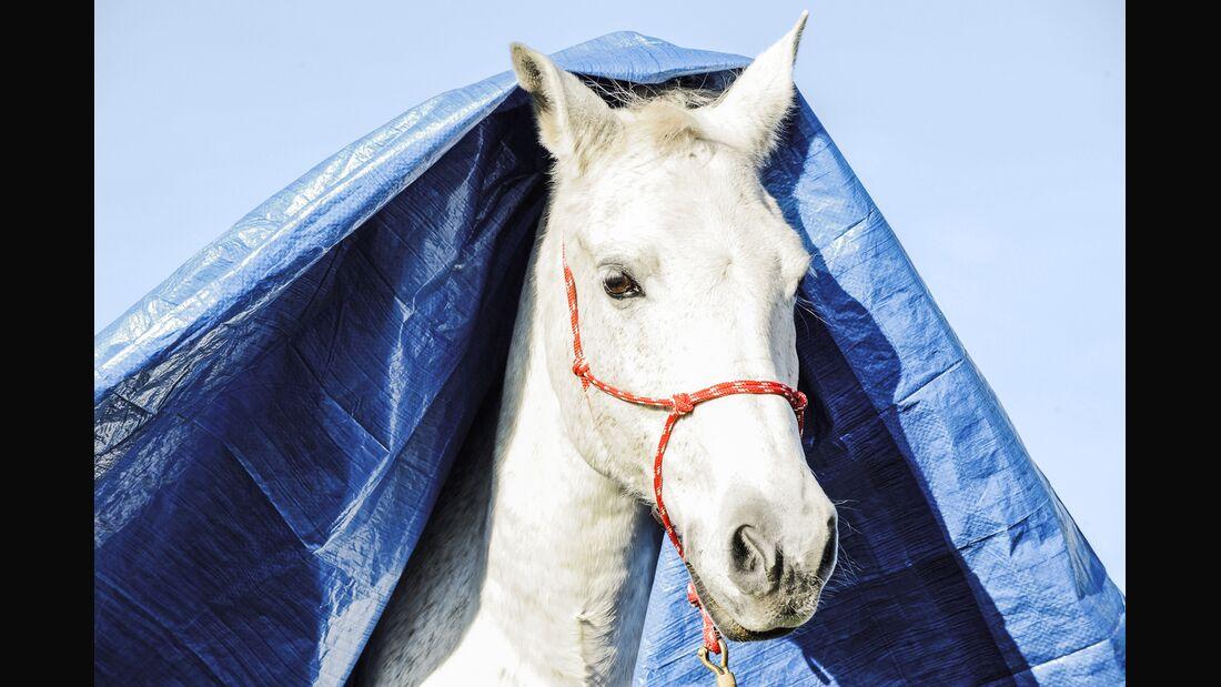 CAV Pferd mit Plane über dem Kopf