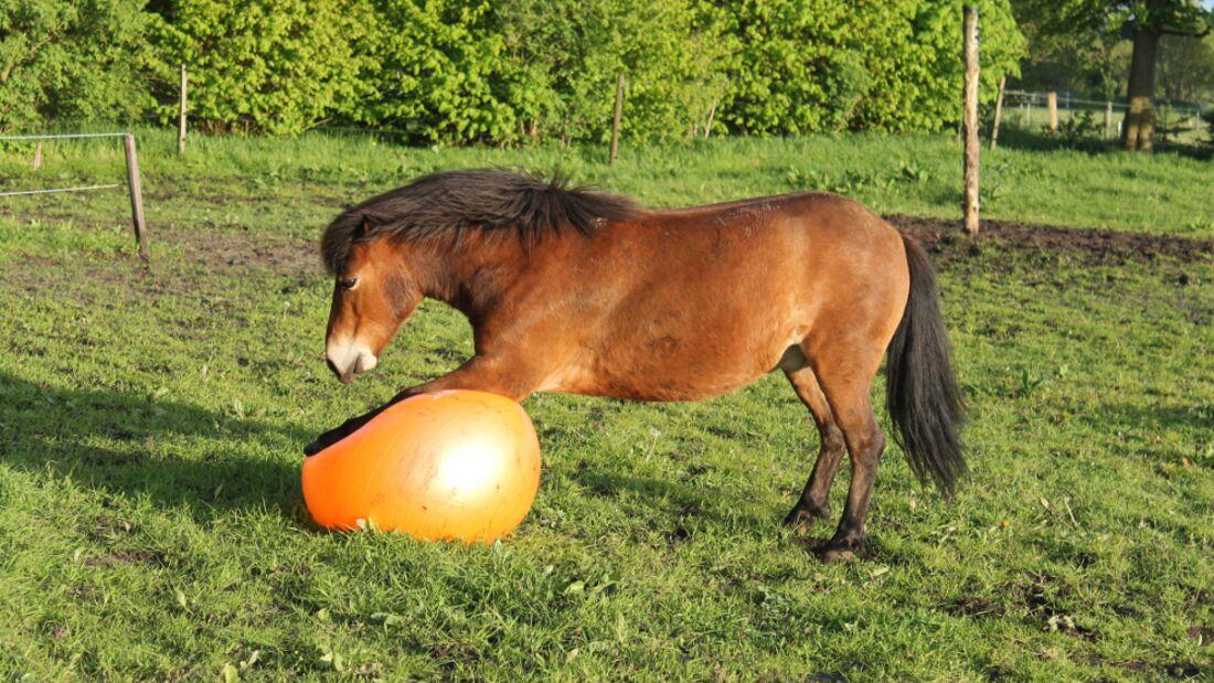 CAV Pferd spielt Ball Tasmate 7