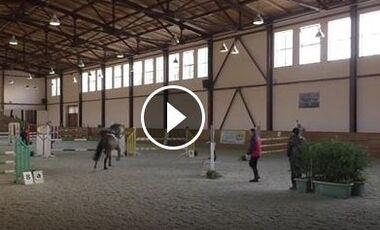 CAV Pferd springt Parcours ohne Reiter Springen