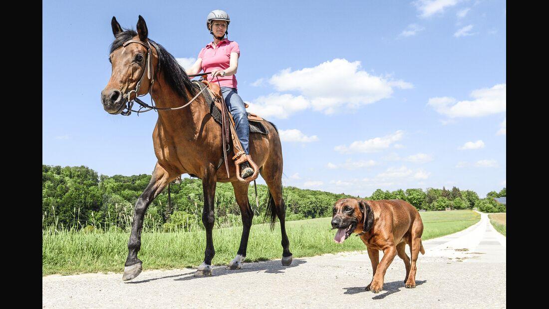 CAV Pferd und Hund