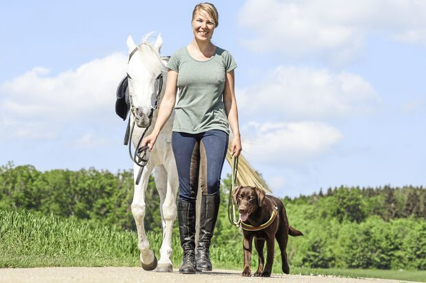 CAV Pferd und Hund 2
