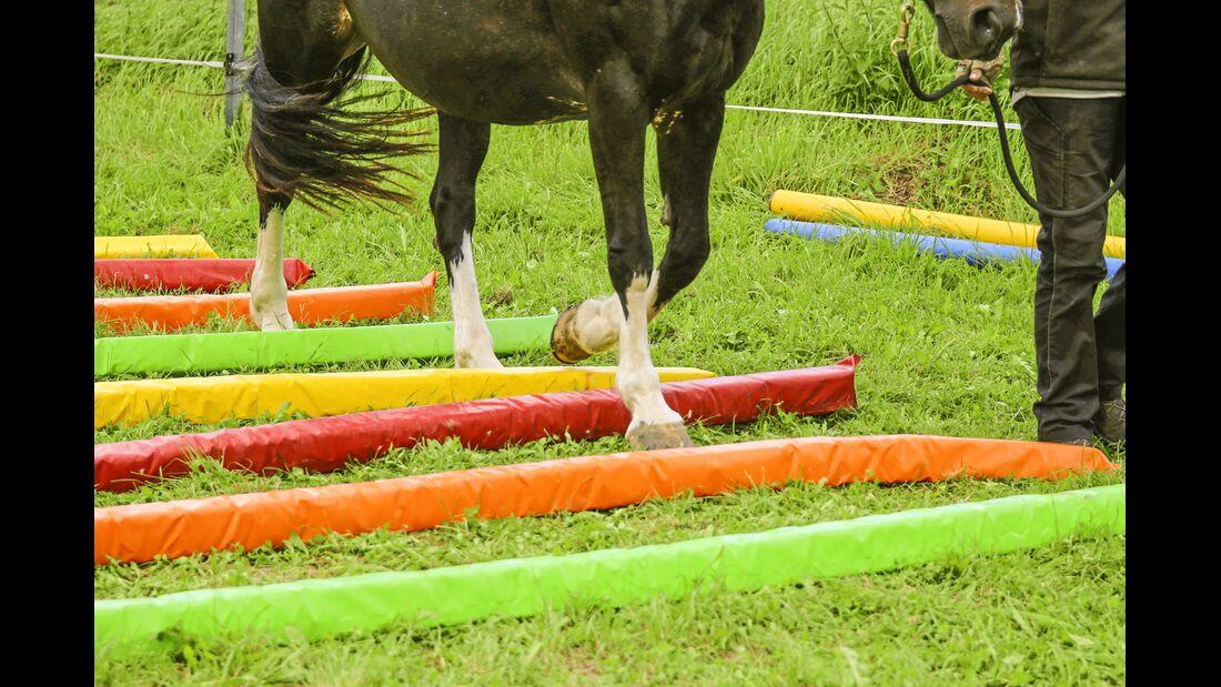 CAV Pferde-Agility  Stangenarbeit