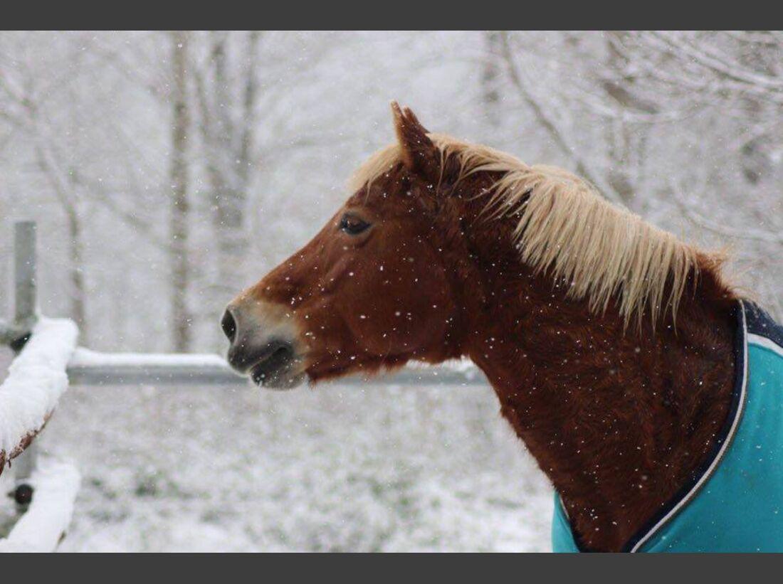 CAV Pferde Schnee Winter 2015 Anabell Bürger