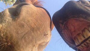 CAV-Pferde-Selfie-Leseraktion-2014-Nadine (jpg)