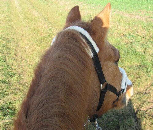 CAV Pferde Senioren 23 Quarter Horse Stute Sunny Baby Sun MS