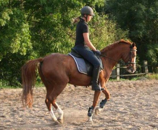 CAV Pferde Senioren Pony Gloria 19 Vielseitigkeit  MS