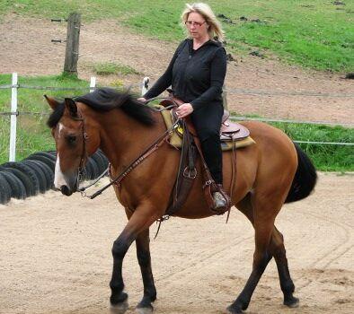 CAV Pferde Senioren Suse 26  MS
