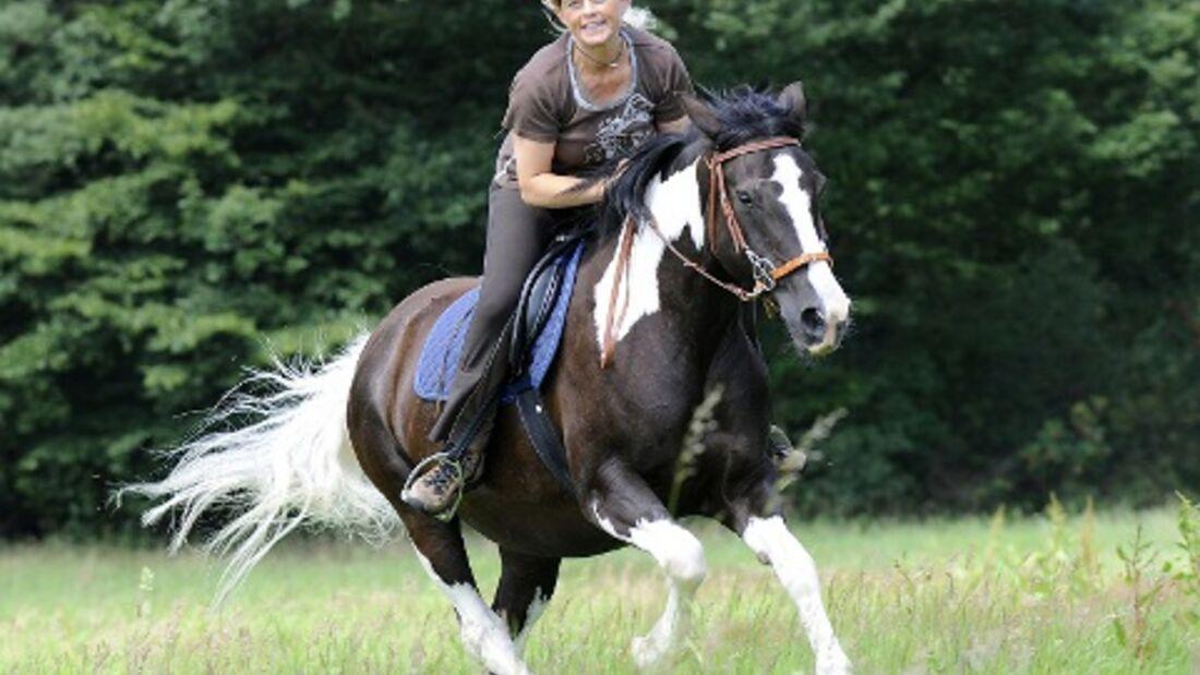 CAV Pferde Senioren Welshcob-Tinker-Hessen-Mix Stute Angelina 20MS