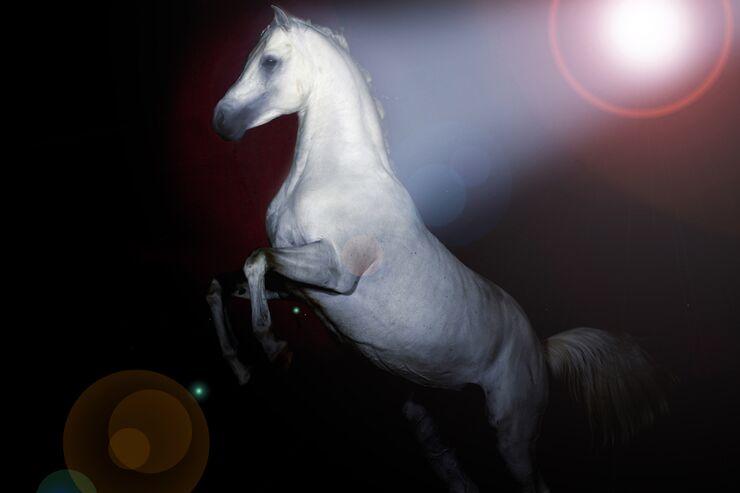 CAV Pferde-Show