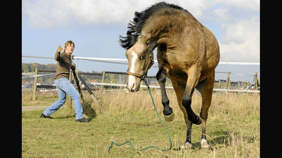 CAV Pferde Versicherungen