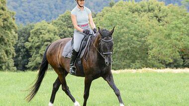CAV Pferde Wiese reiten Biegung Trab