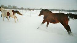 CAV Pferde Winter Schnee Winterfotos Pferdefotos Leserfotos 2012