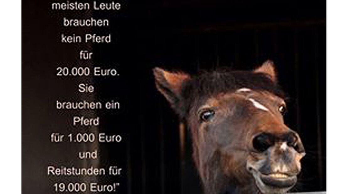 CAV Pferde Zitate Leserfotos 1