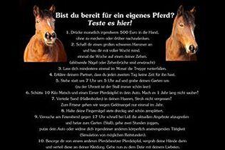 Pferde Sprüche Zitate 100 Sprüche Bilder