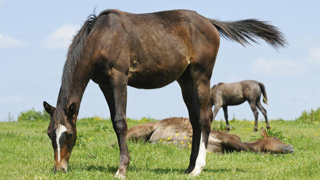 CAV Pferde auf der Weide Rädlein