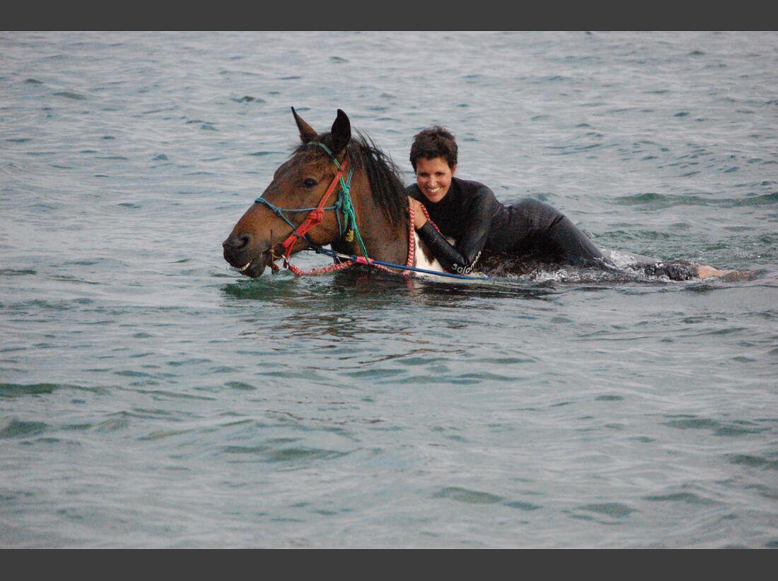 CAV-Pferde-beim-schwimmen-Eva-Dinnessen-2