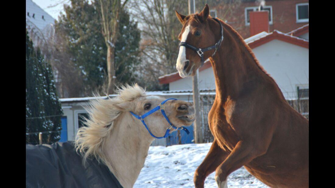 CAV Pferde im Schnee