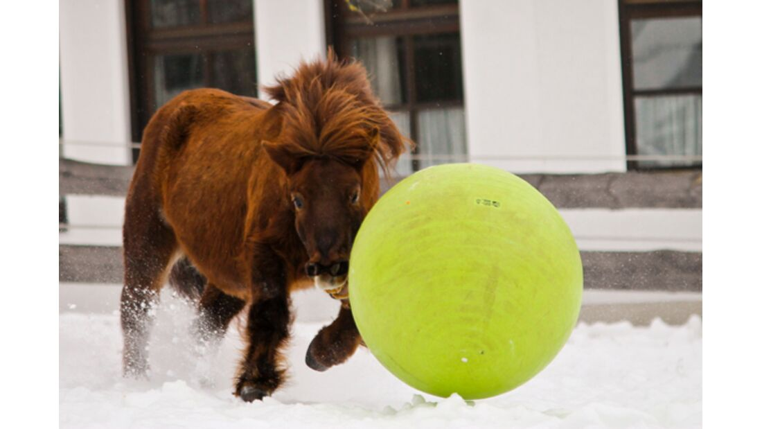 CAV Pferde im Schnee - Max