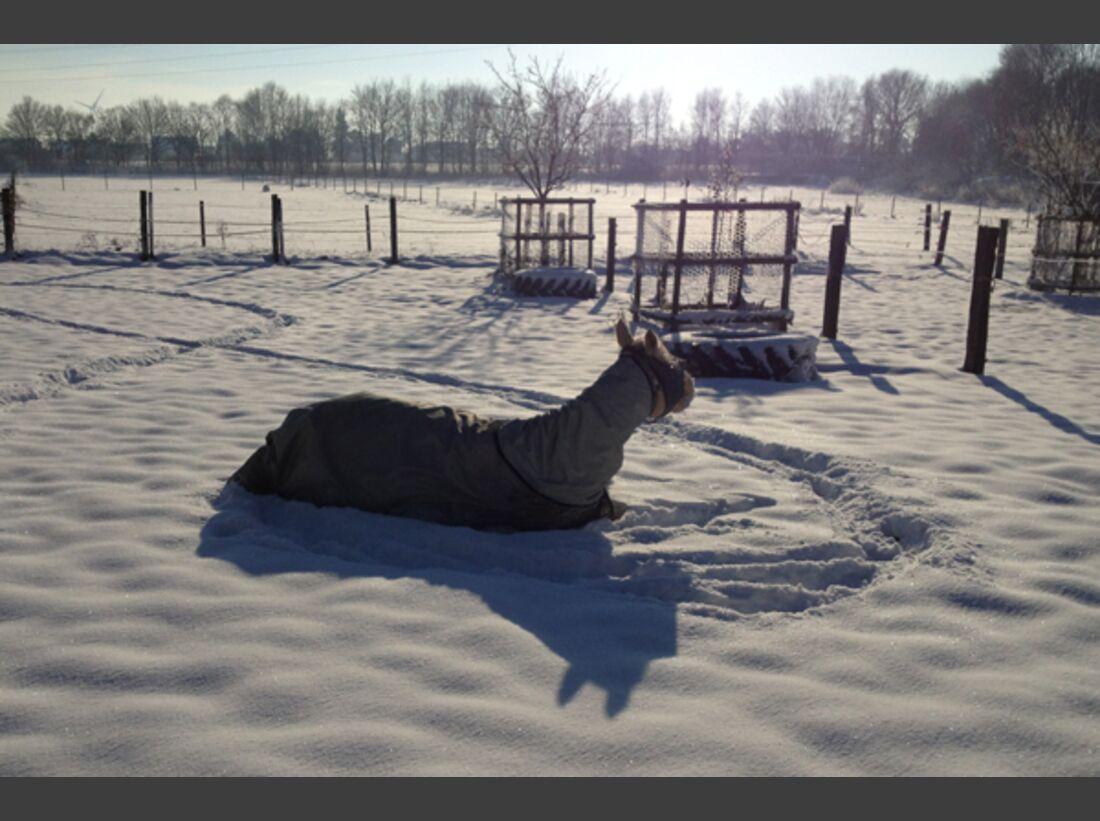 CAV Pferde im Schnee - Slide