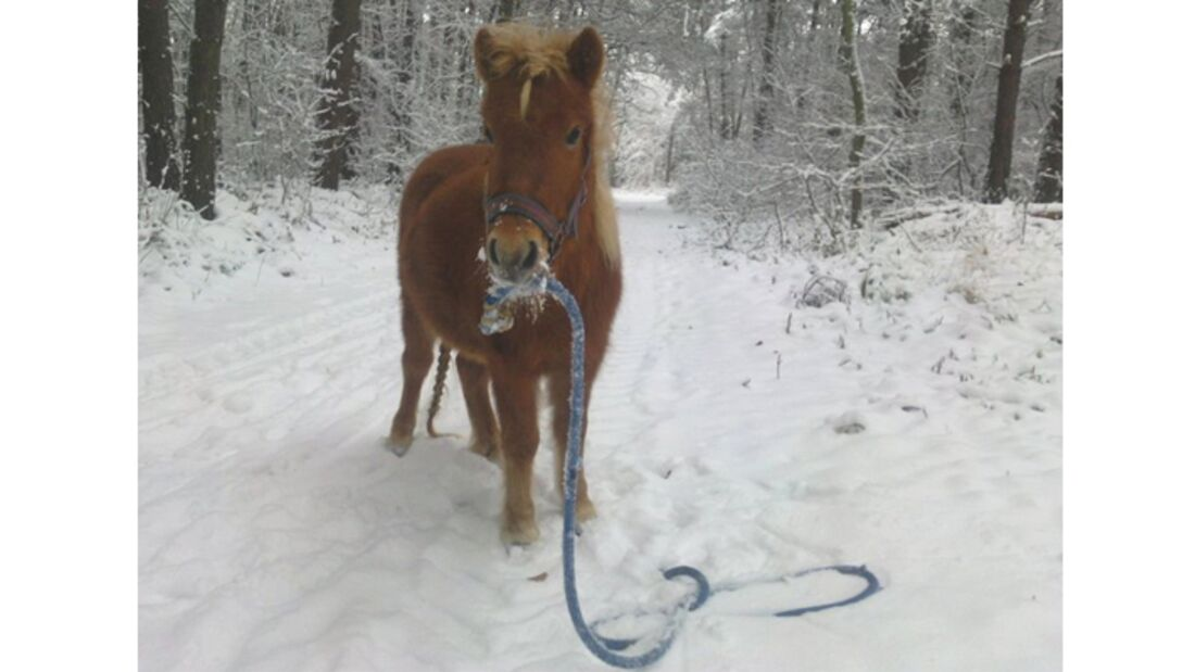CAV Pferde im Schnee Winter 2012-10-30 3