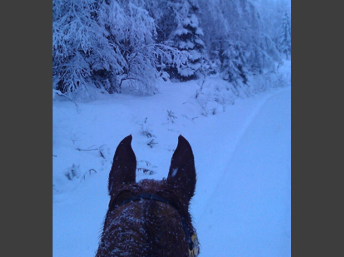 CAV Pferde im Schnee Winter 2012-10-30 4