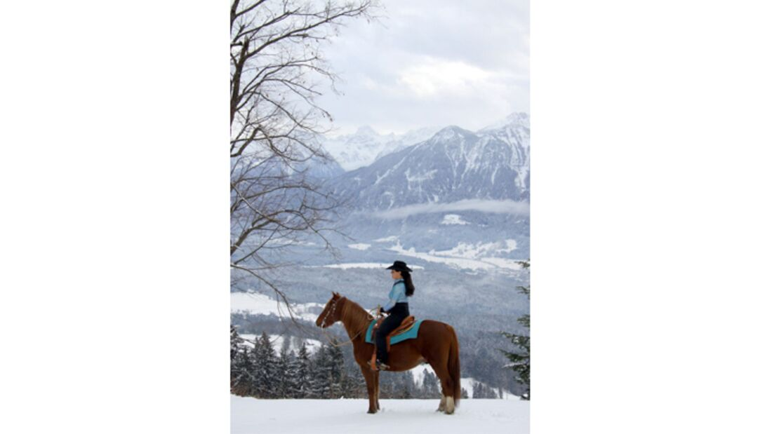 "CAV Pferde im Schnee Winter 2012-10-30 Morgan Horse Wallach ""Fleeting Jack"" 5"