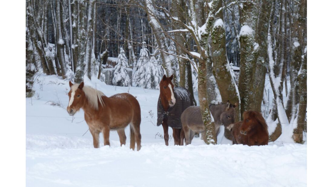 CAV Pferde im Schnee Winter 3