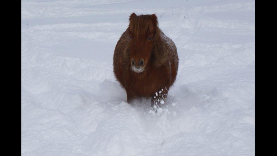 CAV Pferde im Schnee Winter 4