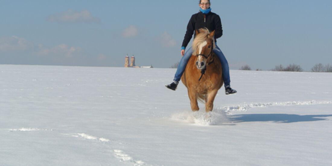 CAV Pferde im Schnee Winter 8