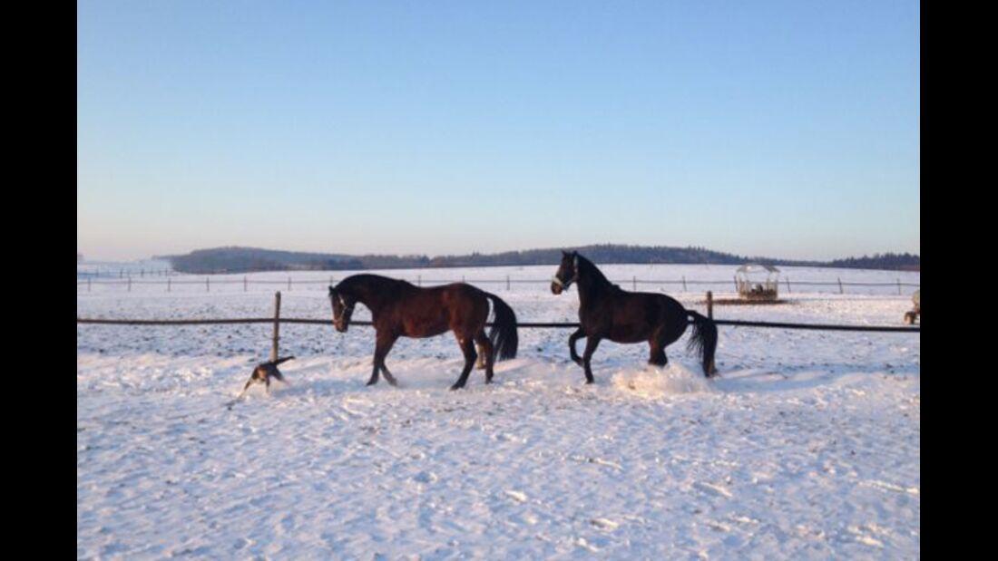 CAV Pferde im Schnee Winter - Charmeur