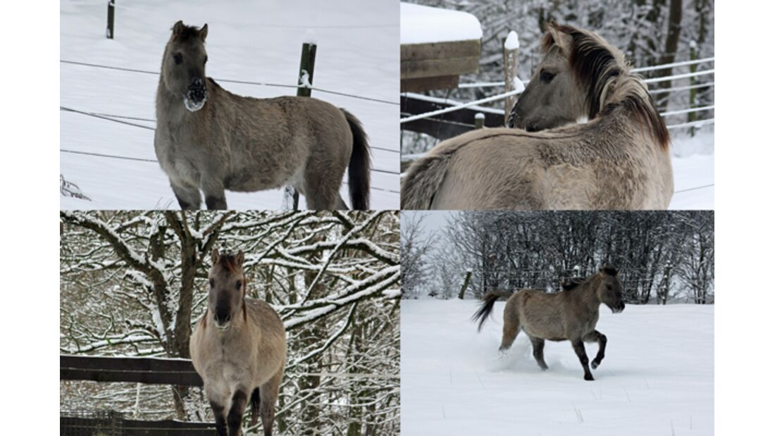 CAV Pferde im Schnee Winter - Wybbo