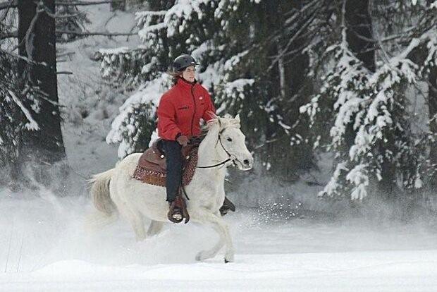 CAV Pferde im Winter