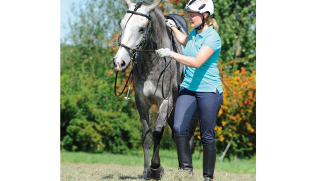 CAV Pferde kaufen Pferdekauf Junge Pferde 1