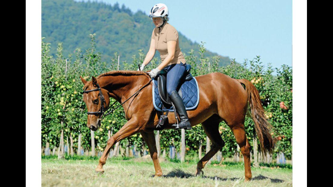 CAV Pferde kaufen Pferdekauf Junge Pferde 2