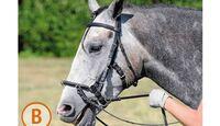 CAV Pferde kaufen Pferdekauf Junge Pferde B