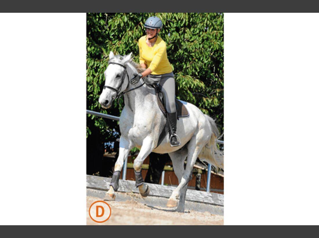 CAV Pferde kaufen Pferdekauf Junge Pferde D