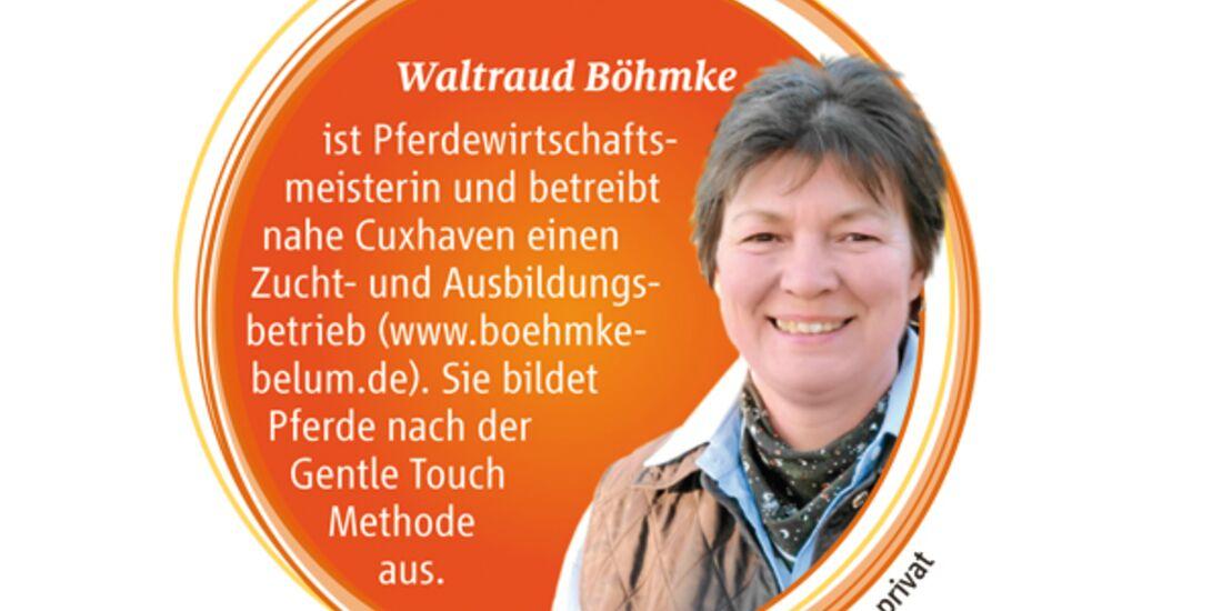 CAV Pferde kaufen Pferdekauf Junge Pferde - Waltraud Böhmke