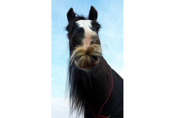 CAV Pferde mit Bart Leserfotos Chantal M.