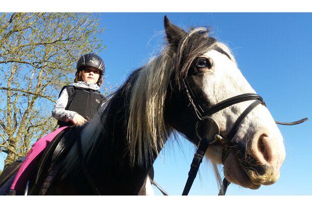 CAV Pferde mit Bart Leserfotos Ivonne Dittmeier