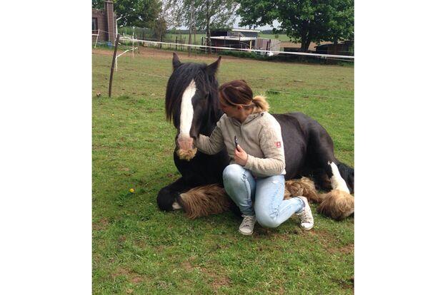 CAV Pferde mit Bart Leserfotos  Peggy Michulski
