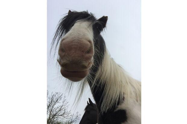 CAV Pferde mit Bart Leserfotos Sarah Denise Kaiser