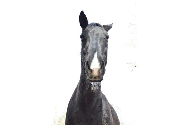 CAV Pferde mit Bart Michaela Meier