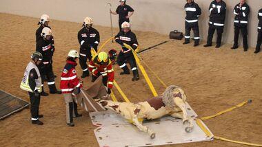 CAV Pferde retten Pferderettung 3