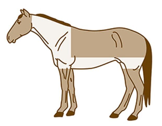 CAV Pferde scheren Deckenschnitt