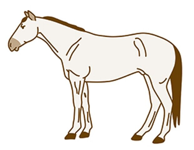CAV Pferde scheren  Komplettschur