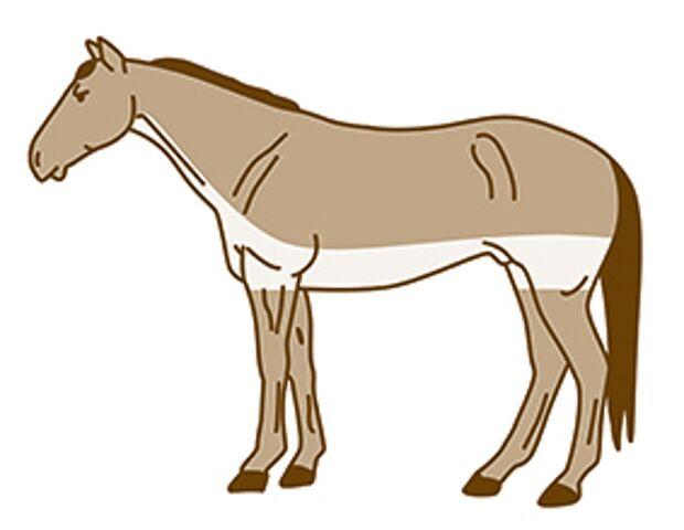 CAV Pferde scheren Streifenschnitt