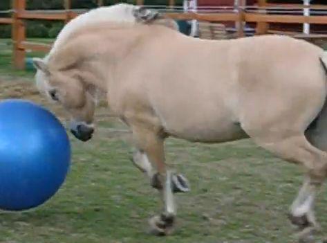 CAV Pferde spielen Ball Motiv 5