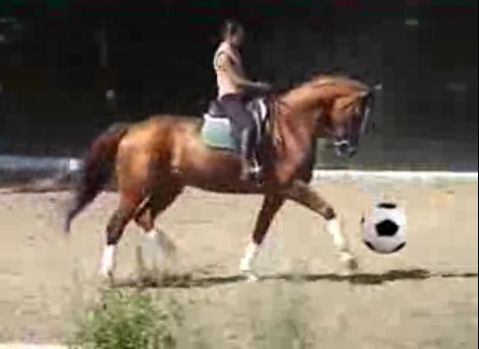 CAV Pferde spielen Ball Motiv 6