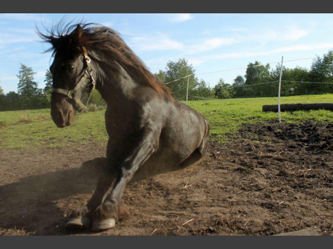 CAV Pferde wälzen 16