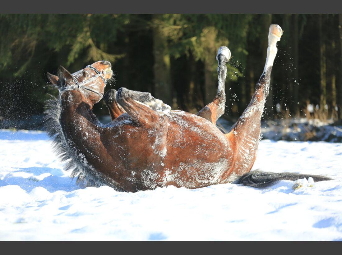 CAV Pferde wälzen Ilona Dudley